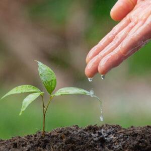 Добрива, мікроелементи, захист рослин
